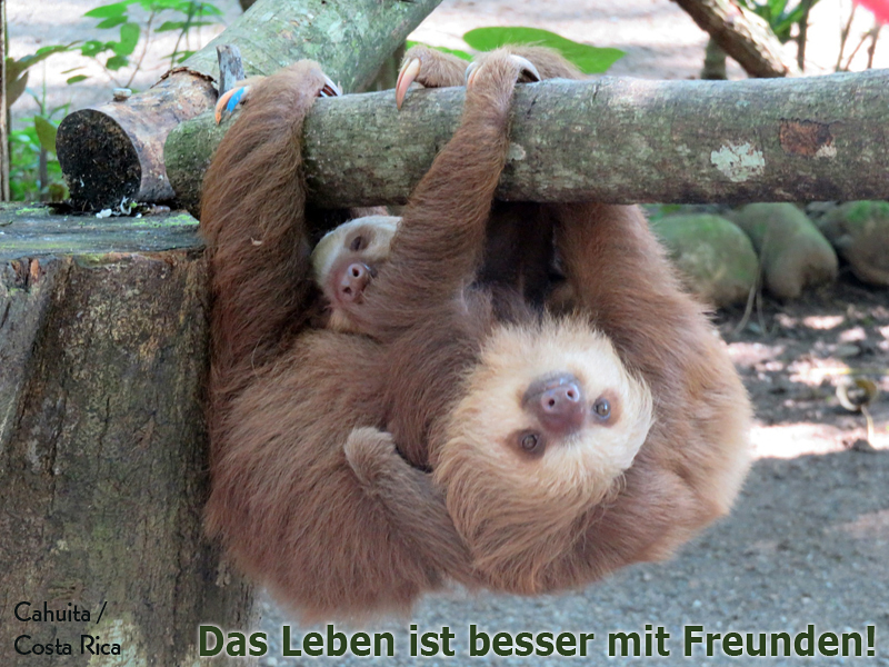 LICHTBLICK Faultiere - Das Leben ist besser mit Freunden!