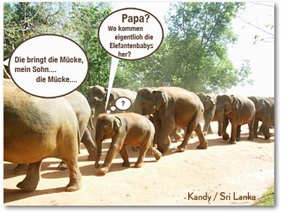 LICHTBLICK Kommunizieren mit Herz und Verstand Witz Mücke-Elefant